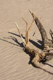 Madera de la desviación en la playa en sol Imágenes de archivo libres de regalías