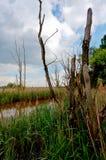 Madera de la muerte del lago Reed, het Vinne, Zoutleeuw, Bélgica Imagen de archivo libre de regalías
