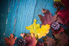 Madera de la naturaleza de las hojas de los regalos del fondo del otoño Fotos de archivo
