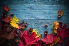 Madera de la naturaleza de las hojas de los regalos del fondo del otoño Imágenes de archivo libres de regalías