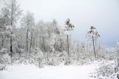 Madera de la nieve imagen de archivo libre de regalías