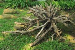 Madera de la raíz del árbol Imagen de archivo libre de regalías