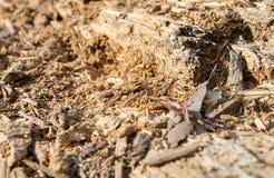 Madera de la termita Fotografía de archivo libre de regalías