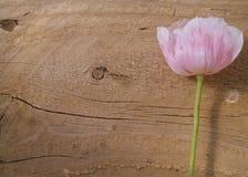 Madera de la textura y fondo rosado de la flor Imágenes de archivo libres de regalías