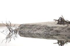 Madera de madera de la rama después de la tormenta en el río Imágenes de archivo libres de regalías