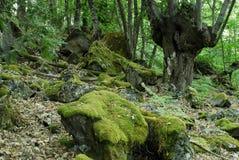 Madera de Mouruas en la provincia de Ourense, España Imagen de archivo