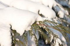 Madera de pino Foto de archivo