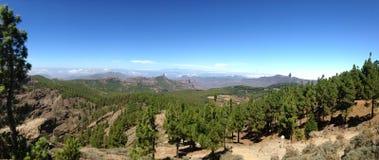 Madera de pino de la isla de Gran Canaria Foto de archivo libre de regalías