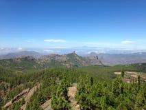 Madera de pino de la isla de Gran Canaria Imagen de archivo libre de regalías