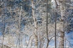 Madera de Taiga en el invierno Taiga del invierno La madera siberiana en el invierno Imagen de archivo libre de regalías