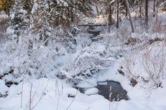 Madera de Taiga en el invierno Taiga del invierno La madera siberiana en el invierno Foto de archivo