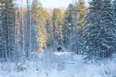 Madera de Taiga en el invierno Taiga del invierno La madera siberiana en el invierno Fotos de archivo
