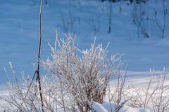 Madera de Taiga en el invierno Taiga del invierno La madera siberiana en el invierno Imagen de archivo