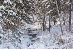 Madera de Taiga en el invierno Taiga del invierno La madera siberiana en el invierno Fotografía de archivo