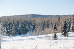 Madera de Taiga en el invierno Taiga del invierno La madera siberiana en el invierno Fotos de archivo libres de regalías