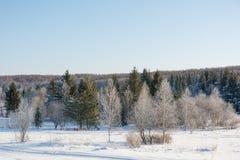 Madera de Taiga en el invierno Taiga del invierno La madera siberiana en el invierno Imágenes de archivo libres de regalías