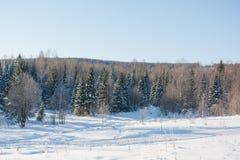 Madera de Taiga en el invierno Taiga del invierno La madera siberiana en el invierno Foto de archivo libre de regalías