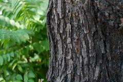 Madera del árbol Fotografía de archivo