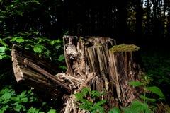 Madera del árbol del tronco Fotografía de archivo