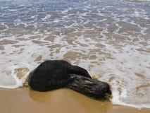 Madera del árbol en la playa Foto de archivo