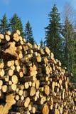 Madera del abedul y árboles Spruce Imágenes de archivo libres de regalías