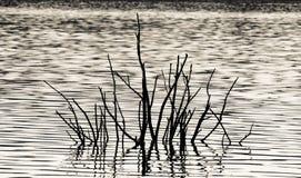 Madera del agua Foto de archivo libre de regalías