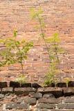 Madera del brote de las paredes de ladrillo una perseverencia del símbolo Foto de archivo libre de regalías