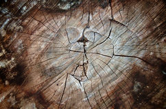 Madera del corazón Imagen de archivo libre de regalías