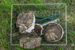 Madera del corte del cáñamo Bosque otoñal foto de archivo libre de regalías