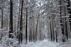 Madera del invierno Imágenes de archivo libres de regalías