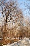Madera del invierno imagenes de archivo