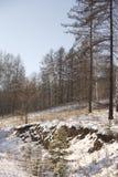 Madera del invierno Fotografía de archivo