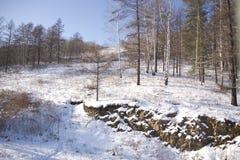 Madera del invierno Fotos de archivo libres de regalías