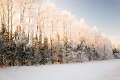 Madera del invierno Fotografía de archivo libre de regalías