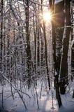 Madera del invierno con luz del sol Imagenes de archivo