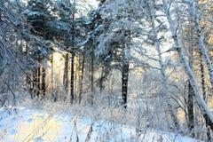 Madera del invierno de la nieve Fotografía de archivo
