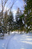 Madera del invierno en la isla de Sajalín Fotos de archivo libres de regalías