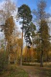 Madera del otoño Foto de archivo