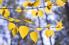 Madera del otoño Fotos de archivo libres de regalías