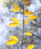 Madera del otoño Imagenes de archivo