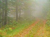 Madera del otoño con las hojas de la niebla y de la haya Foto de archivo libre de regalías