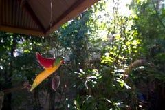 Madera del pájaro Imagenes de archivo