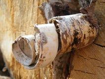 Madera del remolino de la cáscara del árbol Foto de archivo