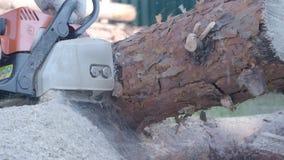 Madera del sawing del hombre con la motosierra almacen de video