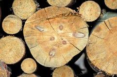 Madera en bosque Foto de archivo libre de regalías