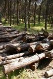 Madera en bosque Fotos de archivo