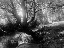 Madera en bosques imágenes de archivo libres de regalías