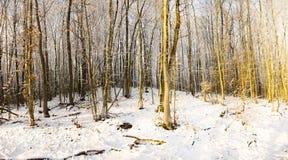 Madera en el invierno Imágenes de archivo libres de regalías
