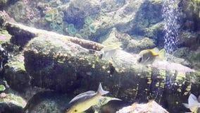 Madera en el mar profundo Fotografía de archivo libre de regalías
