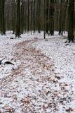 Madera en invierno Fotografía de archivo libre de regalías